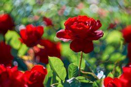 blog d'amore